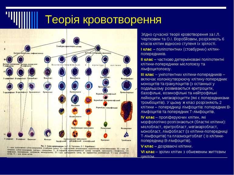 Теорія кровотворення Згідно сучасної теорії кровотворення за І.Л. Чертковим т...
