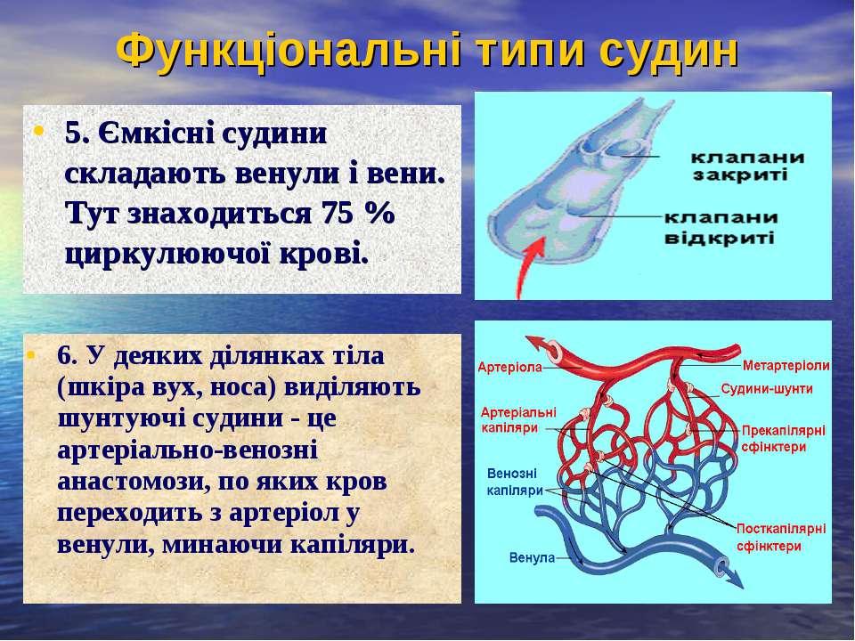 Функціональні типи судин 5. Ємкісні судини складають венули і вени. Тут знахо...