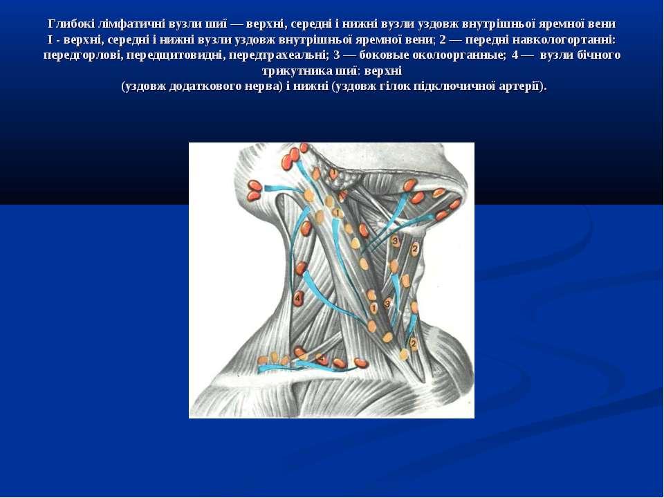 Глибокі лімфатичні вузли шиї — верхні, середні і нижні вузли уздовж внутрішнь...