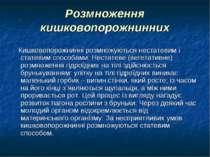 Розмноження кишковопорожнинних Кишковопорожнинні розмножуються нестатевим і с...