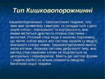 Тип Кишковопорожнинні Кишковопорожнинні – багатоклітинні тварини, тіло яких м...