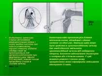 Видаляючи затискач злегка dorsolateral міжвиросткова мітка і тому ввідна част...