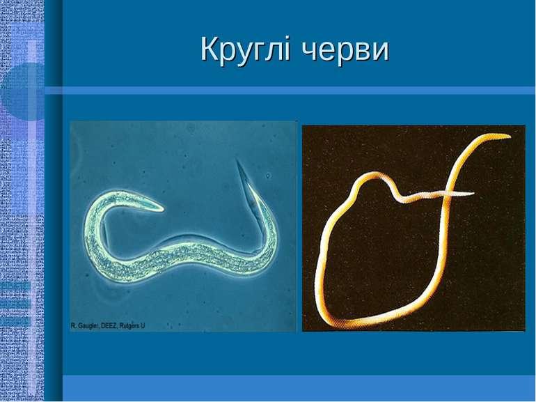 Круглі черви