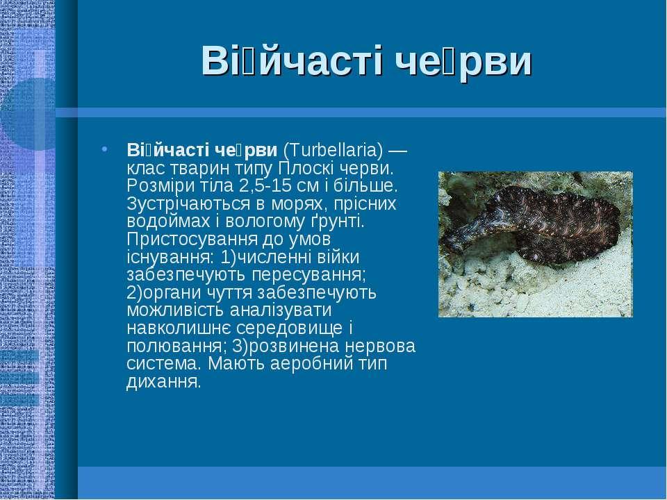 Ві йчасті че рви Ві йчасті че рви (Turbellaria)— клас тварин типу Плоскі чер...