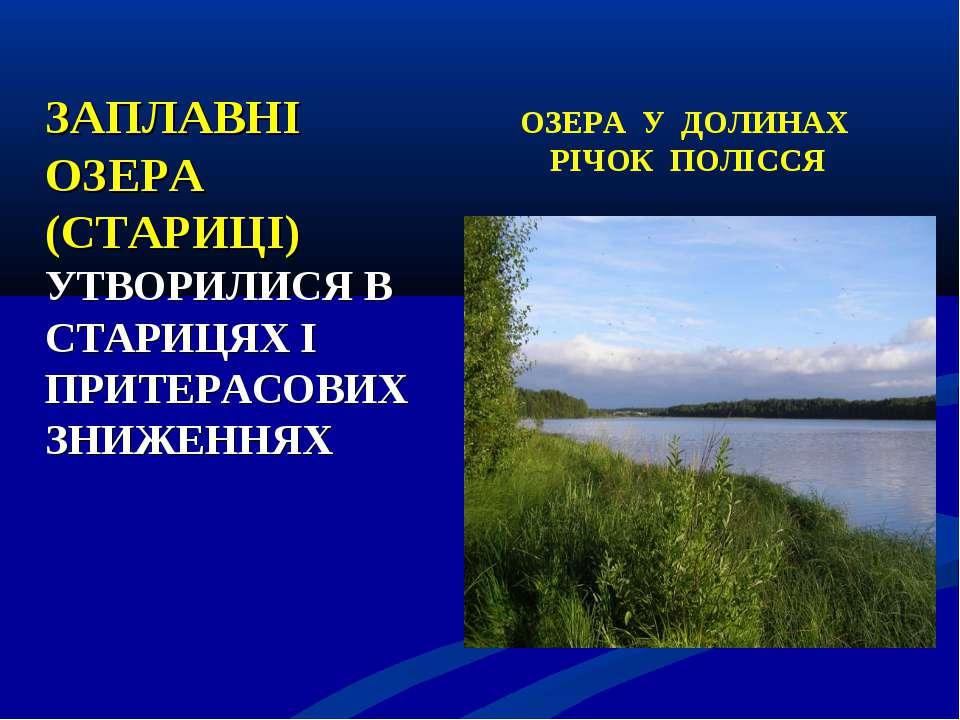 ЗАПЛАВНІ ОЗЕРА (СТАРИЦІ) УТВОРИЛИСЯ В СТАРИЦЯХ І ПРИТЕРАСОВИХ ЗНИЖЕННЯХ ОЗЕРА...