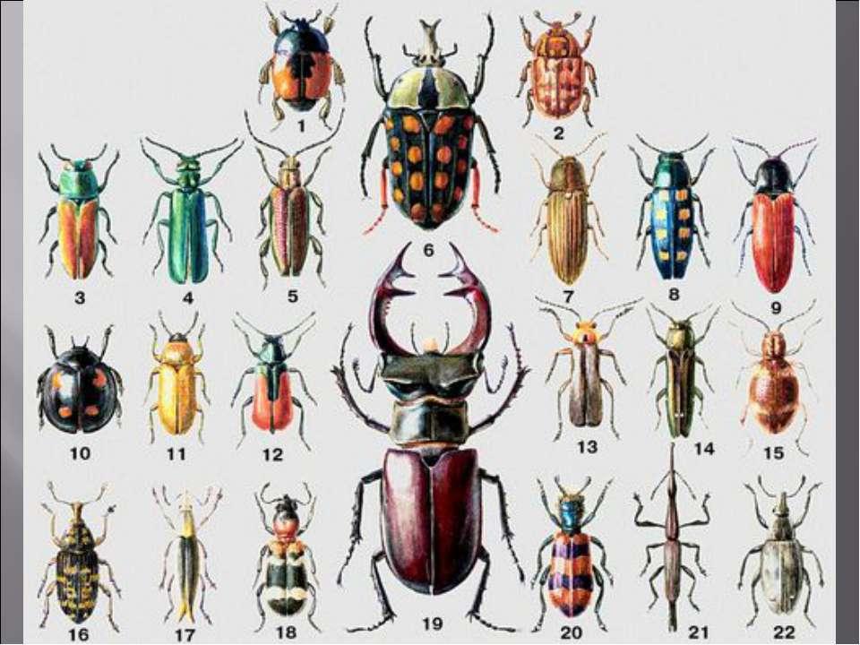 одна самых список жуков с картинками путин