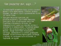 Чи знаєте ви, що…? За короткий проміжок часу тонна сарани може з`їсти приблиз...