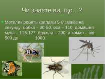 Чи знаєте ви, що…? Метелик робить крилами 5-9 змахів на секунду, бабка – 30-5...