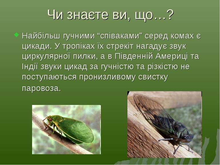 """Чи знаєте ви, що…? Найбільш гучними """"співаками"""" серед комах є цикади. У тропі..."""