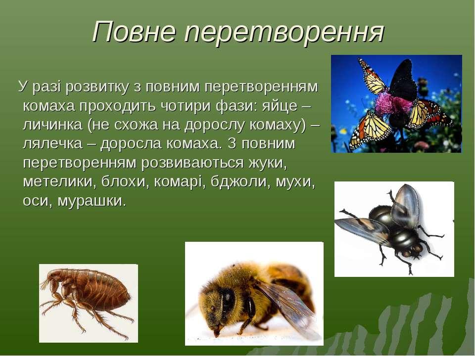 Повне перетворення У разі розвитку з повним перетворенням комаха проходить чо...