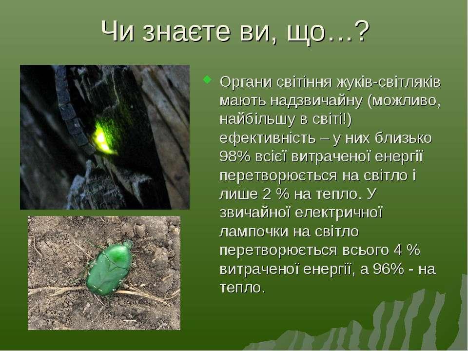 Чи знаєте ви, що…? Органи світіння жуків-світляків мають надзвичайну (можливо...