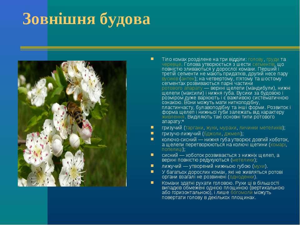 Зовнішня будова Тіло комах розділене на три відділи: голову, груди та черевце...