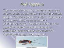 Ряд Таргани Тіло тарганів плескате, передня пара крил перетворена на надкрила...