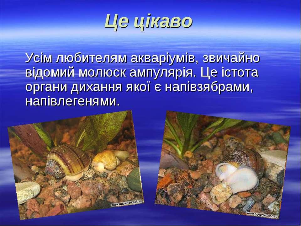 Це цікаво Усім любителям акваріумів, звичайно відомий молюск ампулярія. Це іс...