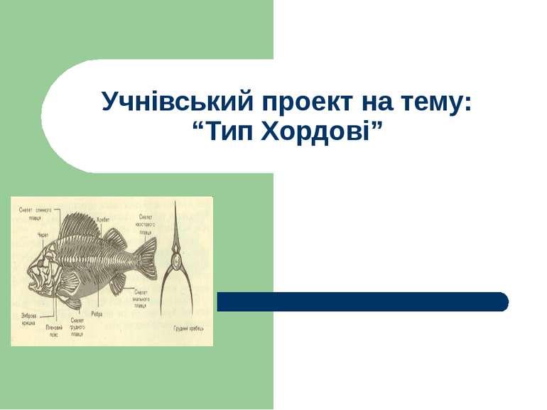 """Учнівський проект на тему: """"Тип Хордові"""""""