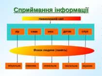 Сприймання інформації Навколишній світ зір смак нюх дотик слух Мозок людини (...