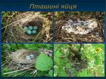 Пташині яйця