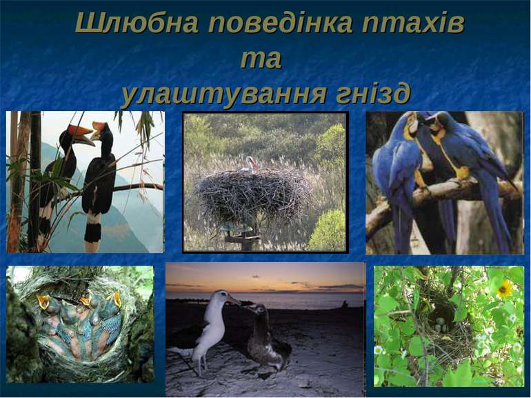 Шлюбна поведінка птахів та улаштування гнізд
