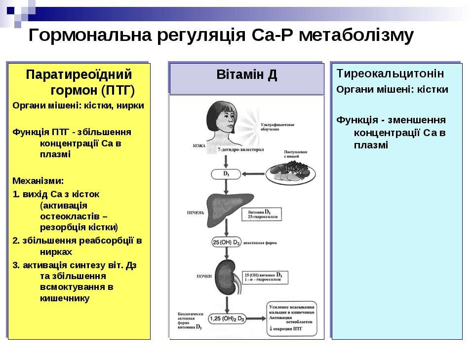 Гормональна регуляція Са-Р метаболізму Паратиреоїдний гормон (ПТГ) Органи міш...