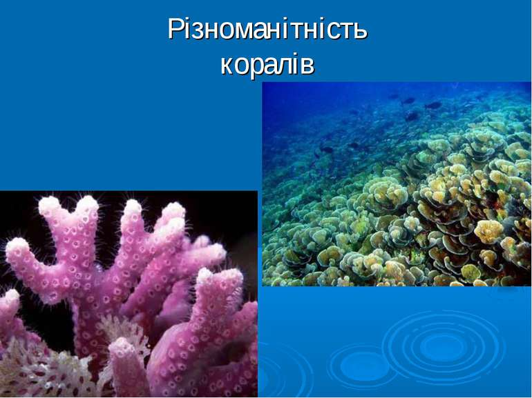 Різноманітність коралів