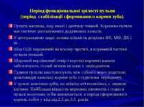 Період функціональної зрілості пульпи (період стабілізації сформованого корен...