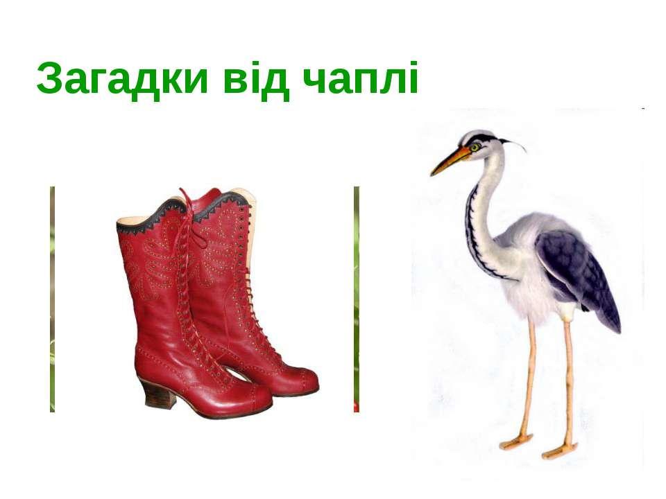 Загадки від чаплі