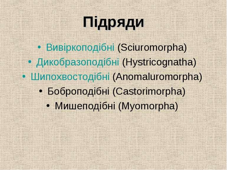 Підряди Вивіркоподібні (Sciuromorpha) Дикобразоподібні (Hystricognatha) Шипох...