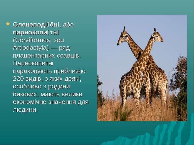 Оленеподі бні, або парнокопи тні (Cerviformes, seu Artiodactyla)— ряд плацен...