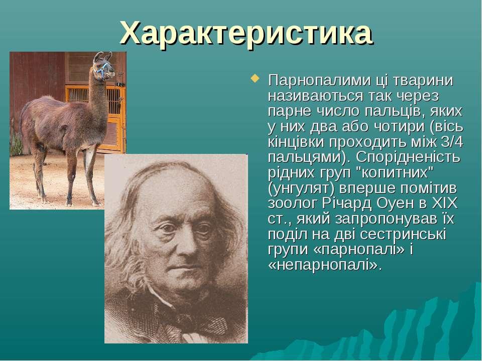 Характеристика Парнопалими ці тварини називаються так через парне число пальц...