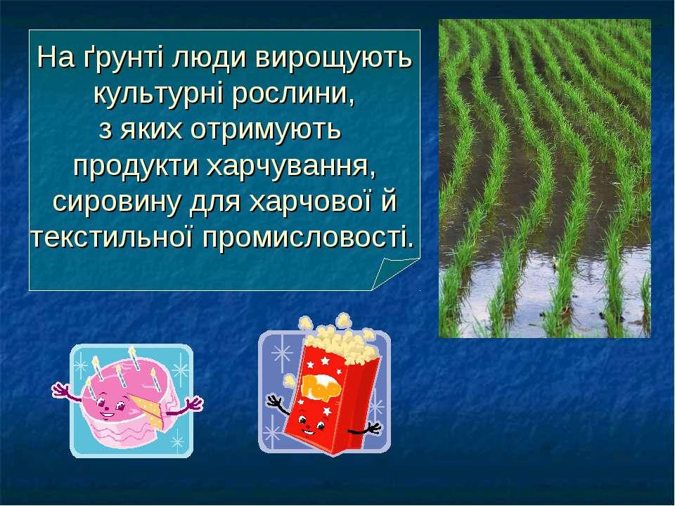 На ґрунті люди вирощують культурні рослини, з яких отримують продукти харчува...