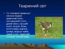 Тваринний світ Тут поширені кримська і скельна ящірки, кримський гекон, леопа...