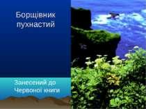 Борщівник пухнастий Занесений до Червоної книги