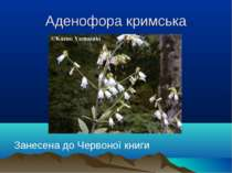 Аденофора кримська Занесена до Червоної книги