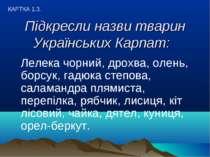 Підкресли назви тварин Українських Карпат: Лелека чорний, дрохва, олень, борс...