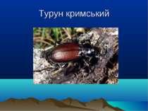 Турун кримський