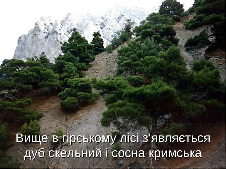 Вище в гірському лісі з'являється дуб скельний і сосна кримська