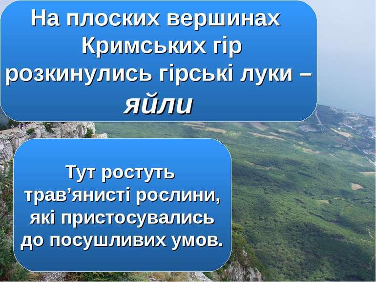 На плоских вершинах Кримських гір розкинулись гірські луки – яйли Тут ростуть...