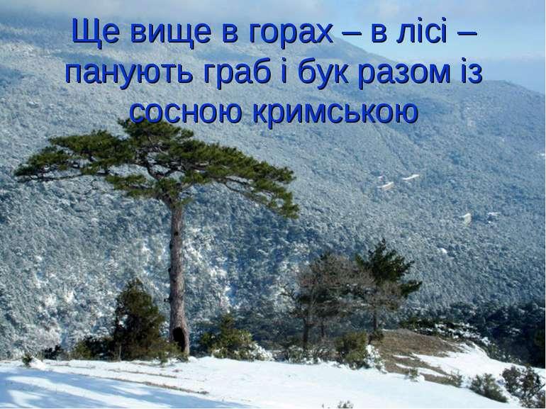 Ще вище в горах – в лісі – панують граб і бук разом із сосною кримською