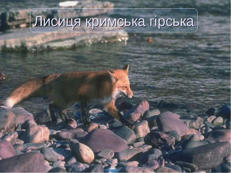 Лисиця кримська гірська