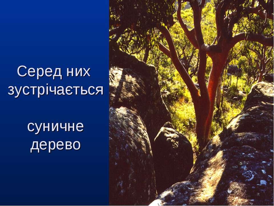 Серед них зустрічається суничне дерево