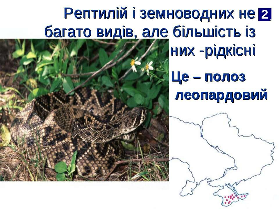Рептилій і земноводних не багато видів, але більшість із них -рідкісні Це – п...