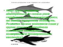Якщо групи організмів адаптуються до схожих умов середовища, у них виникають ...