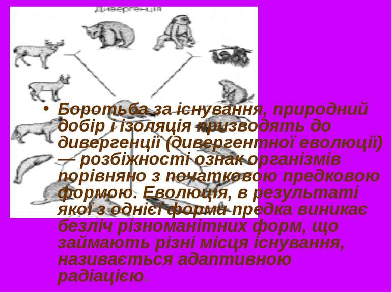 Боротьба за існування, природний добір і ізоляція призводять до дивергенції (...