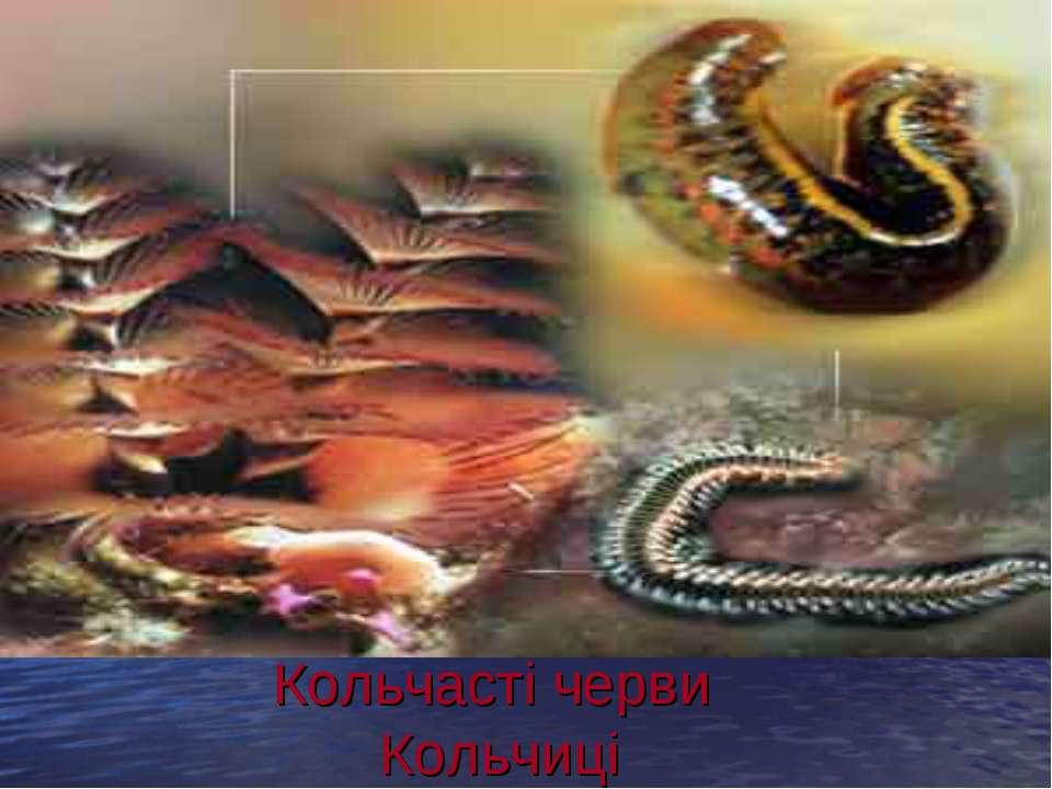 Кольчасті черви Кольчиці .