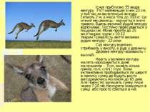 Існує приблизно 55 видів кенгуру. Ріст найменших з них 23 см, у той час як ве...