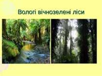 Вологі вічнозелені ліси