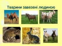 Тварини завезені людиною