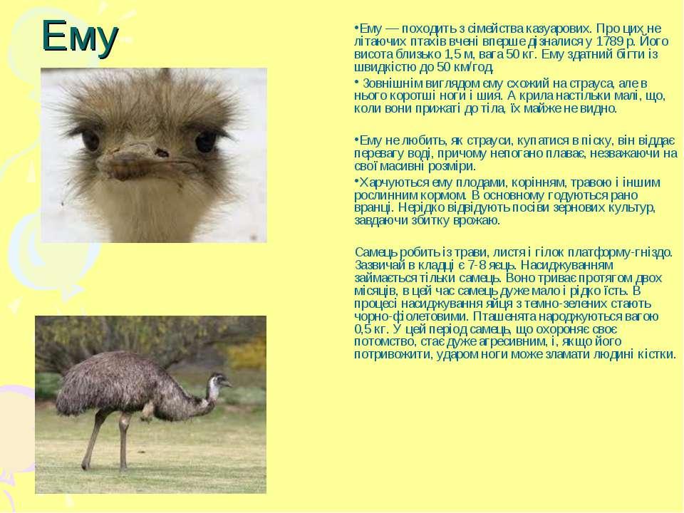 Ему Ему — походить з сімейства казуарових. Про цих не літаючих птахів вчені в...