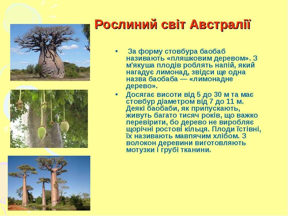 Рослиний світ Австралії За форму стовбура баобаб називають «пляшковим дерево...