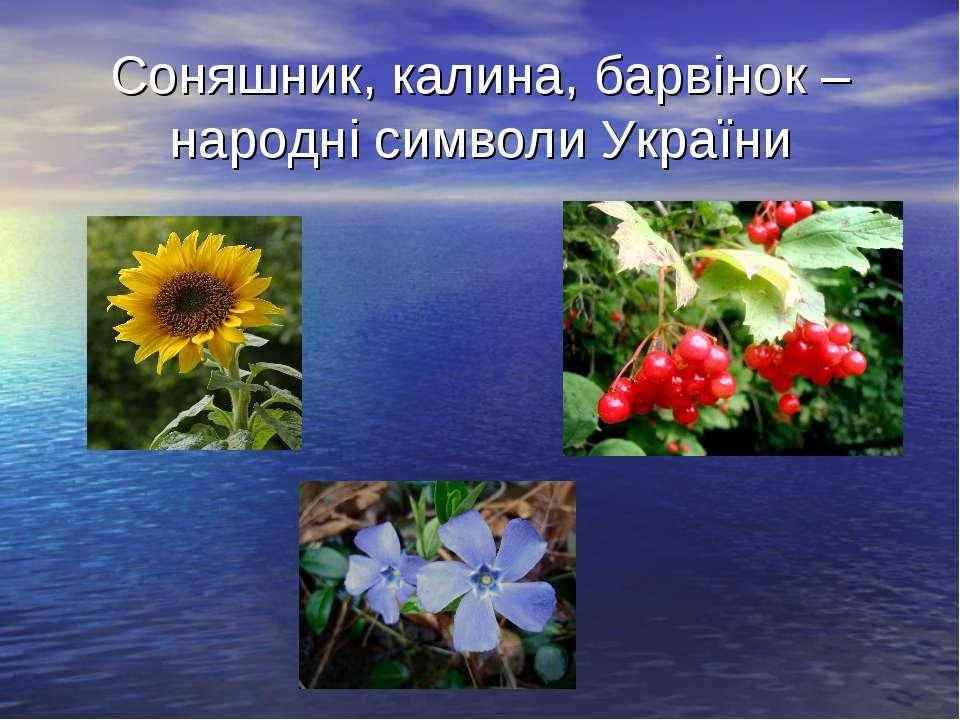 Соняшник, калина, барвінок – народні символи України